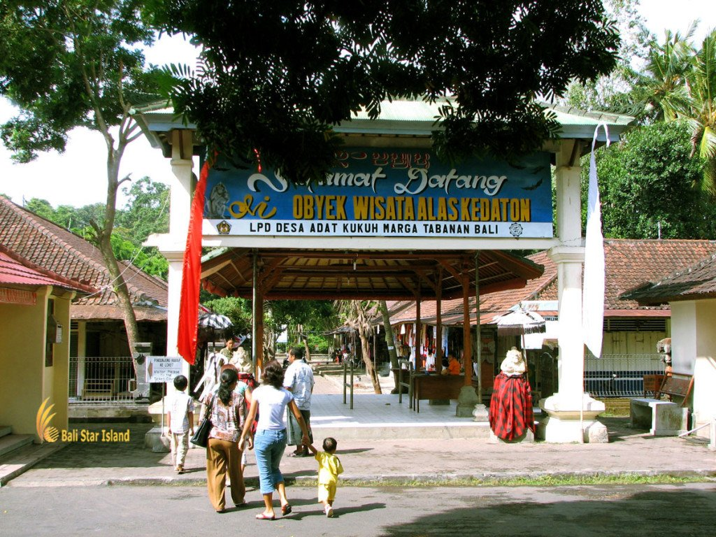 entrance gate, alas kedaton, monkeys, forest, monkey forest, bali, places, places of interest, bali places of interest