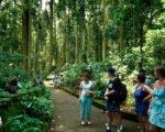 true balinese, bali, experience, trekking, adventures, true balinese experience, bali trekking, jungle trekking, village trekking, bali jungle trekking, bali village trekking, sangeh monkey forest