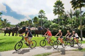 bali, adventure, tours, cycling, mountain, kintamani, elephant park, bali cycling, bali adventures, mason adventure, cycling adventures, elephant park cycling, kintamani cycling, elephant safari park