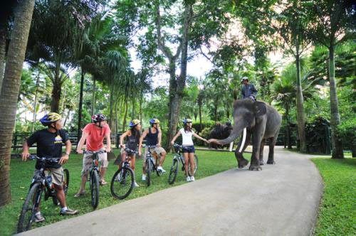 bali, tours, cycling, exciting activities in Ubud
