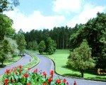 tropical flower, bali, botanical garden, kebun, raya, eka karya, bedugul, bali botanical garden, kebun raya, kebun raya bedugul, places, places of interest