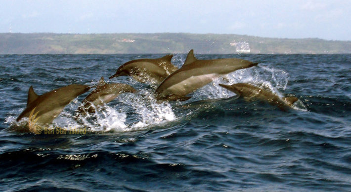 Bali Dolphin Watching Tours