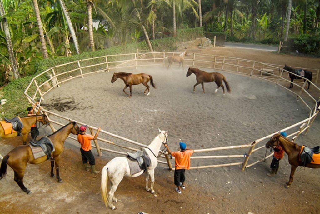 saba beach horse stable, horse stable, bali horse stable, bali horse riding