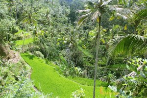 gunung kawi temple, rice terrace, gunung kawi, bali, gianyar, temples, archaeological sites, places to visit, bali places to visit