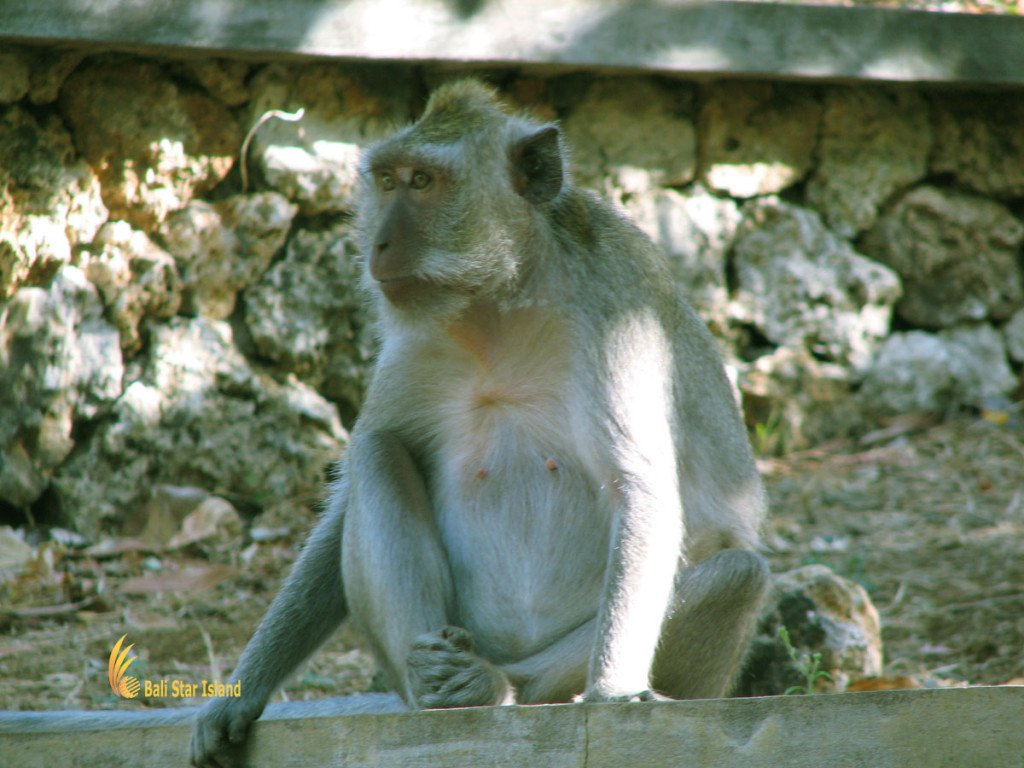 amazing Uluwatu Temple bali, temple, hindu, places, places of interest, places to visit, monkeys