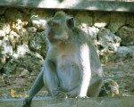 bali, temple, hindu, places, places of interest, places to visit, monkeys