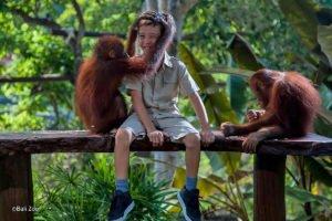 orangutan, bali zoo, bali, elephant, rafting, packages, adventures, elephant ride, elephant rafting, bali zoo elephant, elephant rafting packages, bali adventure packages