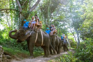 elephant safari, bali zoo, bali, elephant, rafting, packages, adventures, elephant ride, elephant rafting, bali zoo elephant, elephant rafting packages, bali adventure packages