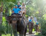 bali zoo, ncentive meeting and adventure activities group