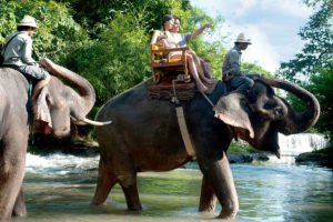 bathing pool, bali zoo, bali, elephant, rafting, packages, adventures, elephant ride, elephant rafting, bali zoo elephant, elephant rafting packages, bali adventure packages