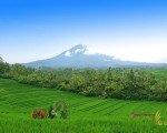 belimbing rice terrace, bali, tabanan, rice terrace, belimbing village, bali rice terrace, places, places to visit, bali places to visit