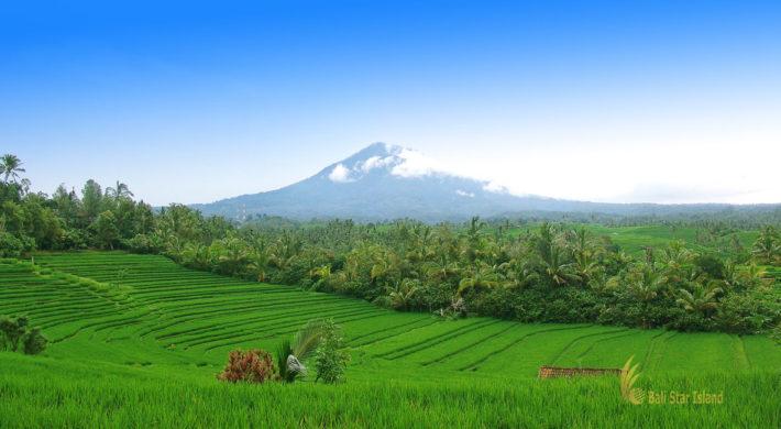 Belimbing Rice Terrace