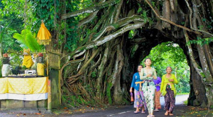 Bunut Bolong | West Bali Hollow Banyan Tree