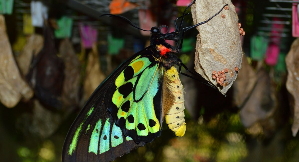 Bali Butterfly Park | Tabanan Places to Visit
