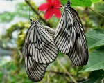 bali, park, butterfly park, bali butterfly park, place to visit, place of interest, tourist destination