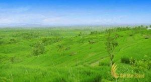 jatiluwih, jatiluwih rice terrace, rice terrace, jatiluwih bali, places of interest, bali places of interest
