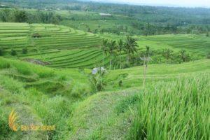 panorama jatiluwih, panoramic view, scenery jatiluwih, jatiluwih rice terrace