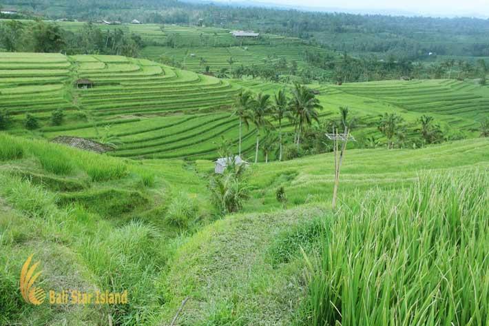 package 5 days panorama jatiluwih, panoramic view, scenery jatiluwih, jatiluwih rice terrace