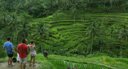 places of interest, bali places of interest, tegalalang rice terrace