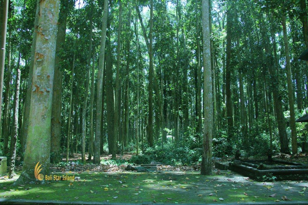 rain forest, sangeh, monkey, forest, bali, places, interest, sangeh monkey forest