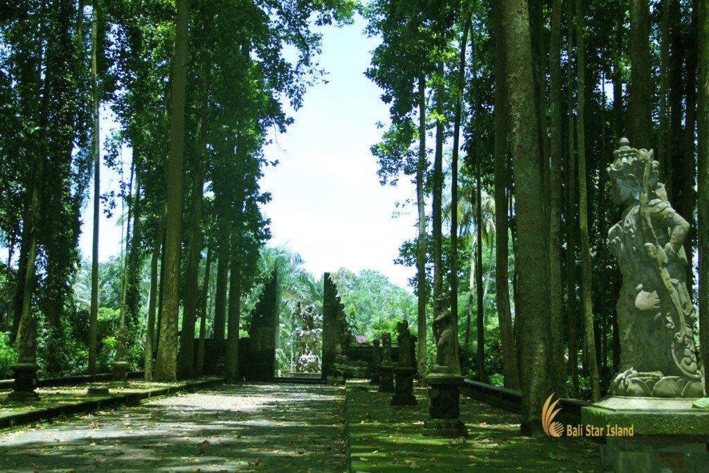 sangeh, monkey, forest, bali, places, interest, sangeh monkey forest, places to visit, bali places to visit