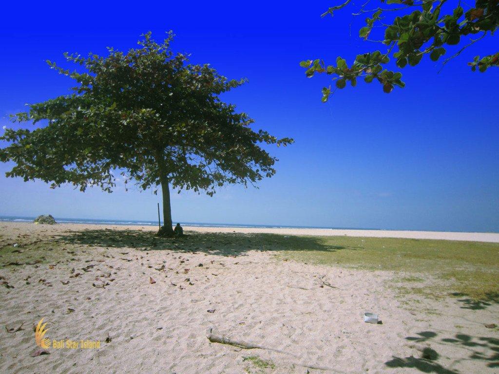 tropical trees, sanur, beach, bali, touirst, places, sanur beach, tourist to stay, bali tourist to stay