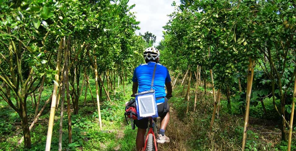 Batur Trail Kintamani – Sobek Cycling | Sobek Bali Adventure