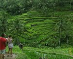 tegalalang, rice, terrace, ubud, bali, places, interest, tegalalang rice terrace, places of interest, bali places of interest