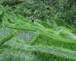view, tegalalang, rice, terrace, ubud, bali, places, interest, tegalalang rice terrace, places of interest, bali places of interest, wonderful scenery