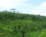 overview, tegalalang, indonesia travel packages