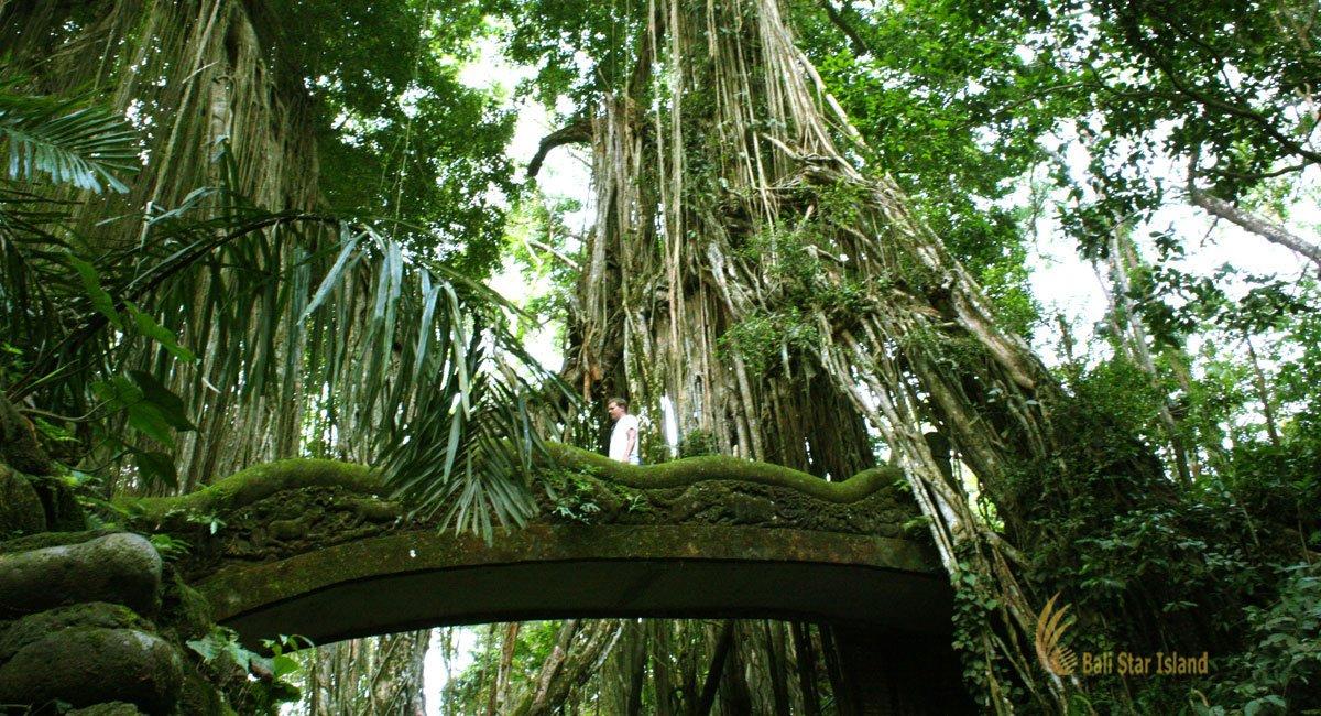 Ubud Monkey Forest Bali Places Of Interest