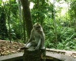 animal sanctuary, ubud, monkey, forest, bali, places, interest, ubud monkey forest, monkey forest, places of interest, bali places of interest, places to visit