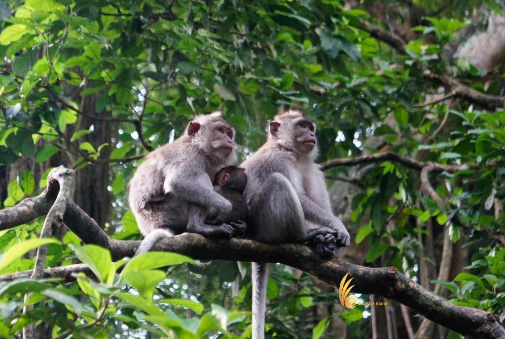 alas kedaton, monkeys, forest, monkey forest, bali, places, places of interest, bali places of interest
