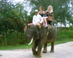 bali, elephants, safari, camp, bali elephants, bali elephant camp, elephant safari, bali elephant safari