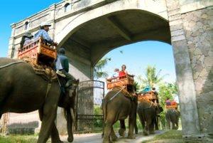 bali, sumatra, elephant, ride, riding, safari, camp, bali elephant, sumatra elephant, bali elephant camp, elephant safari, elephant ride, elephant safari ride, bali elephant safari, bali elephant ride, bali elephant park