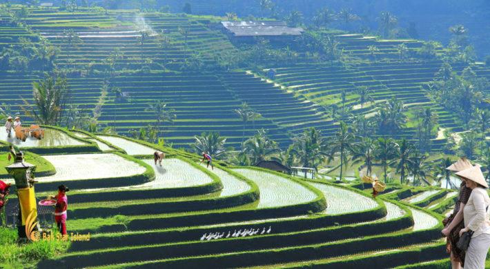 Bali Farm Tour
