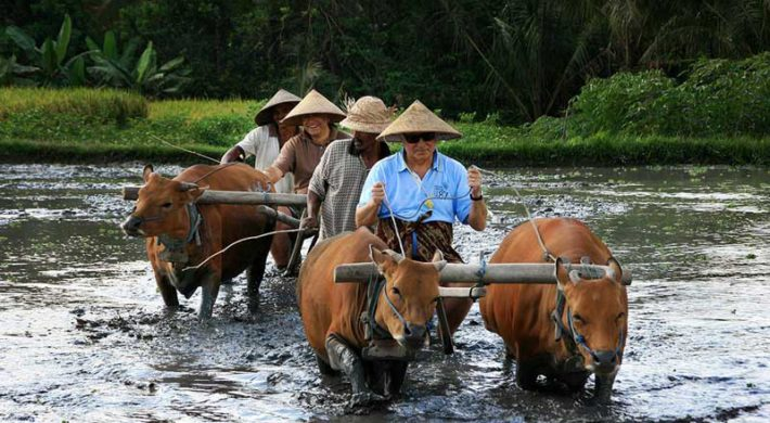 Bali Traditional Farming Tour | Bali Shore Excursions