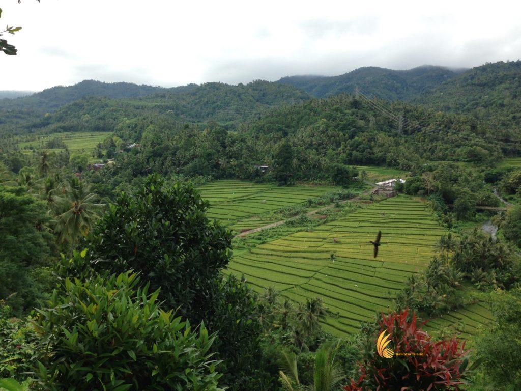 busungbiu, bali, rice terrace, bali rice terrace, busungbiu bali, tourist destinations