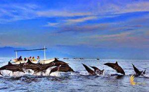 bali, bali tour packages, singaraja lovina tour, singaraja dolphin tour, dolphin tour,