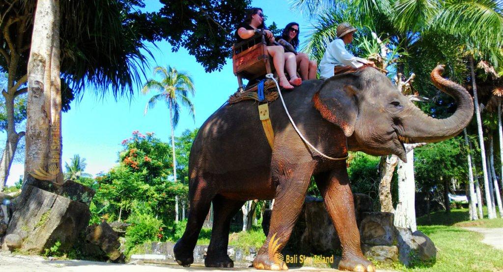 elephant, ubud, tours, ride, riding, elephant ride, ubud tour, elephant ride ubud tour, tour packages, bali tour packages, elephant ride ubud tours,