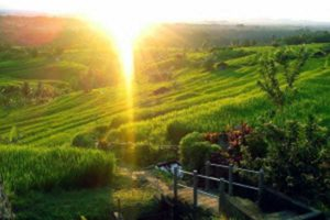 jatiluwih, tice terraces, place of interest