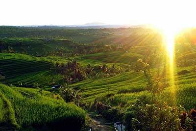 jatiluwih, rice terrace,bali, tourist