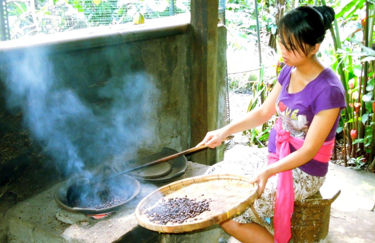 Bali Coffee Plantations | Luwak Coffee - Places to Visit