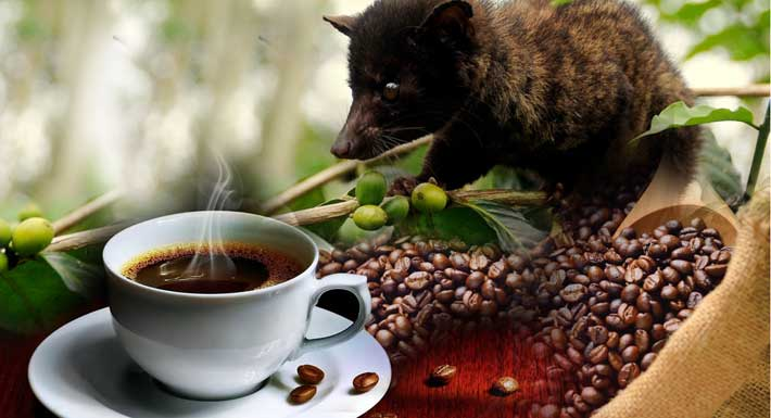Bali Coffee Plantations | Luwak Coffee