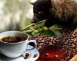coffee plantations, bali, coffee, luwak, plantations, bali coffee, luwak coffee, coffee plantations, bali coffee plantations, luwak coffee bali, bali luwak coffee