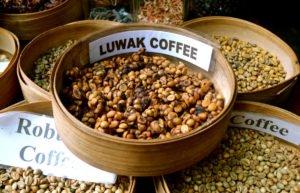 bali, coffee, luwak, plantations, bali coffee, luwak coffee, coffee plantations, bali coffee plantations, luwak coffee bali, bali luwak coffee, dry luwak coffee