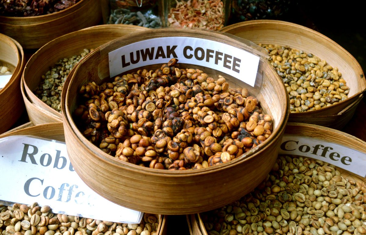 A Hands-on Immersive Bali Tour: Private Cooking Class ...  Kopi Luwak Coffee Plantations