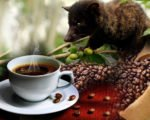 attraction, bali, coffee, luwak, plantations, bali coffee, luwak coffee, coffee plantations, bali coffee plantations, luwak coffee bali, bali luwak coffee