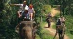 bali elephant camp, elephant camp, bali elephant ride, elephant safari