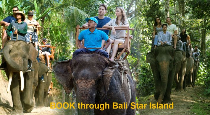 Bali Elephant Ride Booking Form – Bali Elephant Safari